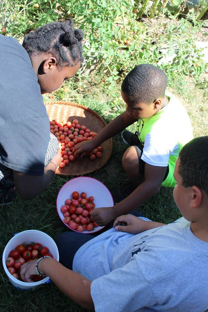 children counting tomatoes they raised in garden